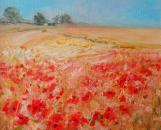 Poppies in a cornfield